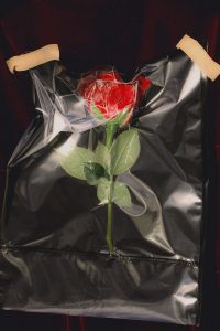 Sally_Ann_Emily_May_Plastic_Heart_Rose