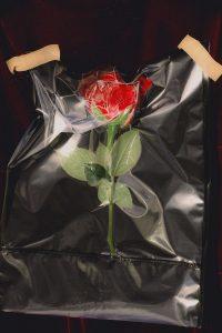 Sally_Ann_Emily_May_Plastic_Heart_Rose